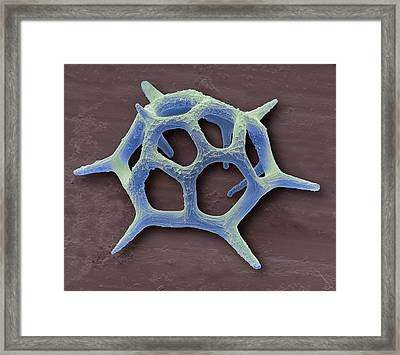 Silicoflagellate Framed Print by Steve Gschmeissner
