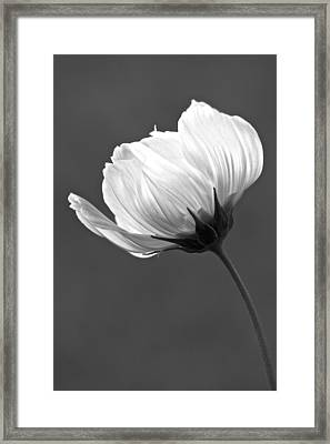 Simply Beautiful In Black And White Framed Print by Penny Meyers