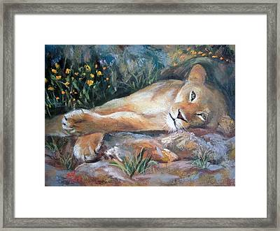 Sleep Lion Framed Print by Jieming Wang