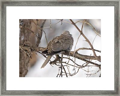 Sleeping Beauty Framed Print by Lori Tordsen