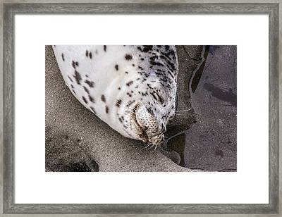 Smile Framed Print by Photographic Art by Russel Ray Photos