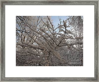 Snow Covered Tree And Sun Framed Print by Winifred Butler