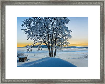 Snow Covered Trees In Extreme Cold Framed Print