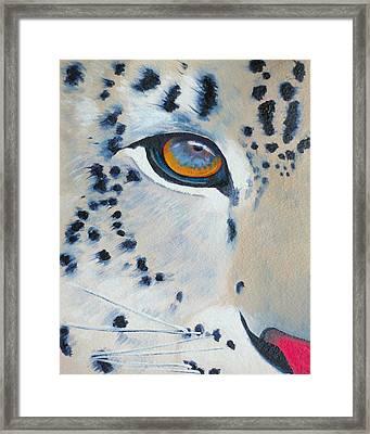Snow Leopard Eye Framed Print by John  Sweeney