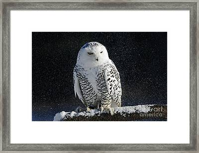 Snowy Owl On A Twilight Winter Night Framed Print
