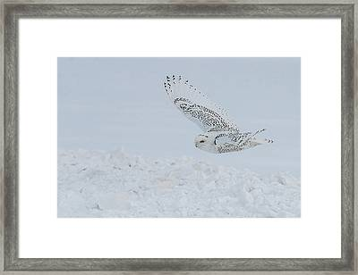 Framed Print featuring the photograph Snowy Owl #2/3 by Patti Deters