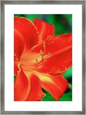 Red, Orange And Yellow Lily Framed Print