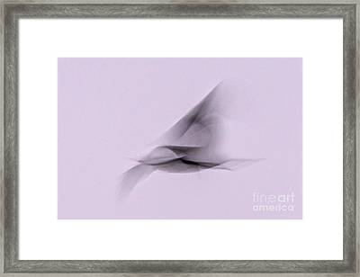Soaring Shadow Framed Print