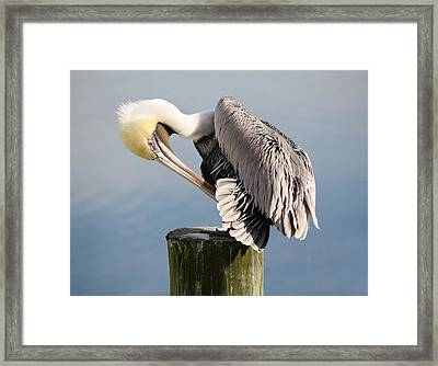 Soft And Delicate Framed Print by Paulette Thomas