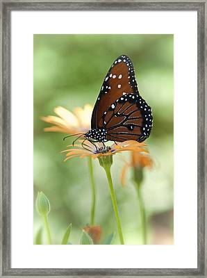 Softly Spoken  Framed Print by Saija  Lehtonen