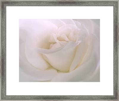 Softness Of A White Rose Flower Framed Print by Jennie Marie Schell
