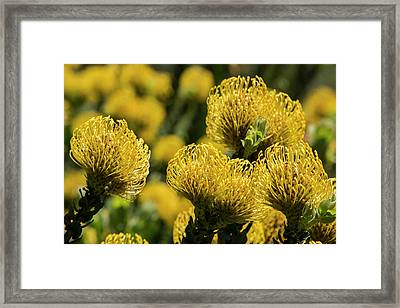South Africa, Cape Town Framed Print
