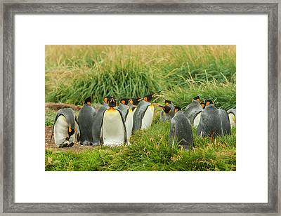 South America, Chile, Patagonia, Tierra Framed Print