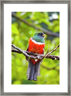 South America, Costa Rica, San Gerardo Framed Print by Jaynes Gallery
