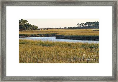 South Carolina Salt Marsh Framed Print