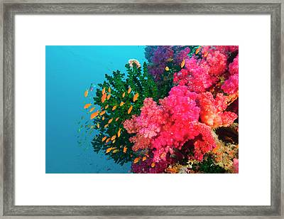 South Pacific, Fiji, Viti Levu, Bligh Framed Print by Michele Westmorland