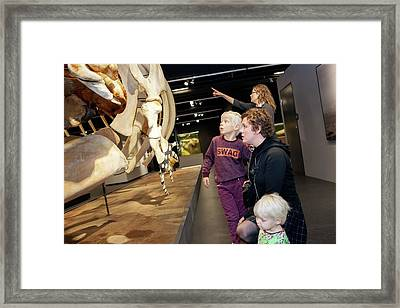 Sperm Whale Skeleton Display Framed Print