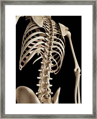 Spine Framed Print