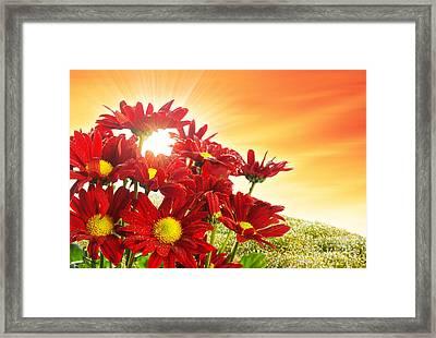 Spring Blossom Framed Print by Carlos Caetano