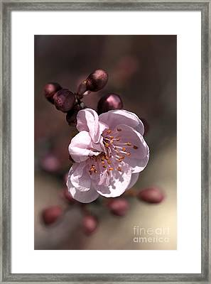 Framed Print featuring the photograph Spring Blossom by Joy Watson