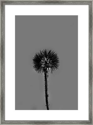 Spring Dandelion Framed Print by Tommytechno Sweden