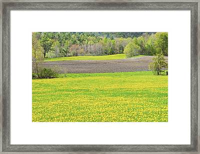Spring Farm Landscape With Dandelion Bloom In Maine Framed Print