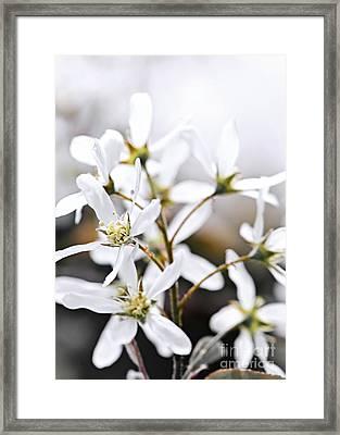 Spring Flowers Framed Print by Elena Elisseeva