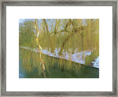 Spring Is In The Air Framed Print by Valia Bradshaw