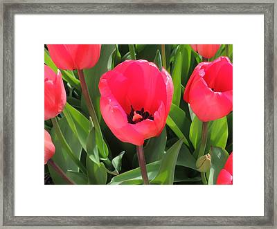 Spring Surprise Framed Print by Karen Horn