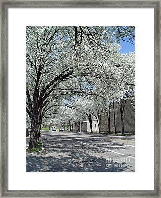 Springtime Corning Ny 3 Framed Print