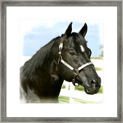 Stallion Framed Print by Paul Tagliamonte