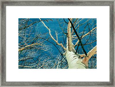 Standing Ovation 2 Framed Print by Barbara Jewell