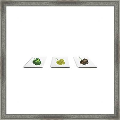 Starch Content Of Leaves Framed Print
