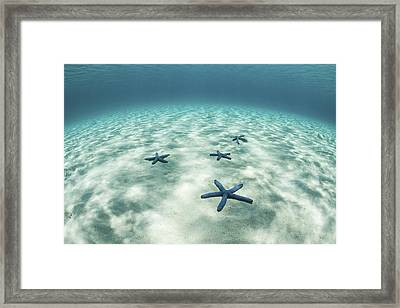 Starfish On A Brightly Lit Seafloor Framed Print