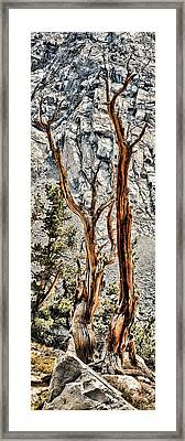 Sticks Framed Print by Kelley King