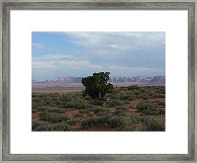 Still Life In The Desert Framed Print