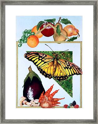 Still Life With Moth #1 Framed Print by Thomas Gronowski