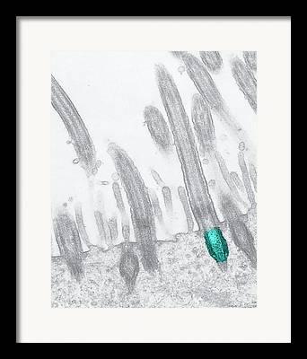 Cytoskeleton Framed Prints