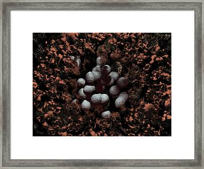 Streptococcus Pyogenes Bacteria Framed Print
