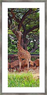 Stretching It Framed Print by Michele Myers