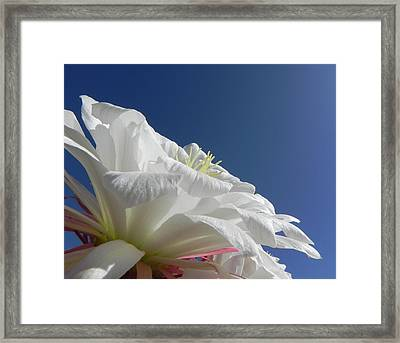 Framed Print featuring the photograph Striking Contrast by Deb Halloran
