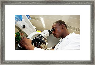 Studying Bones And Cartilage Framed Print by Rob Judges/oxford University Images