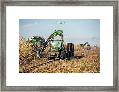 Sugar Cane Harvest Framed Print by Jim West