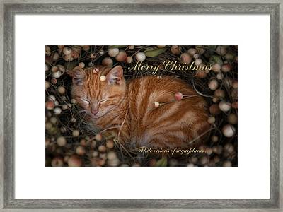 Sugarplum Framed Print