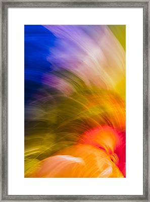 Summer Bloom Framed Print
