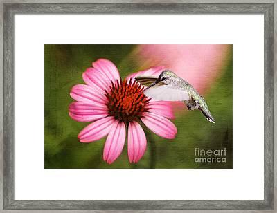 Summer Grace Framed Print