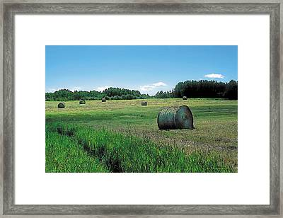 Summer Hay 3 Framed Print