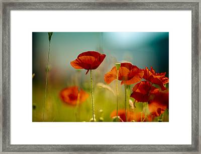 Summer Poppy Framed Print by Nailia Schwarz