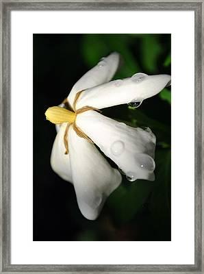 Sun Kissed Gardenia Framed Print