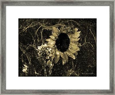 Sunflower Abstract  Framed Print